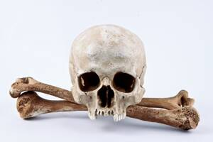 Skull Replica Nova with Pair of Bones